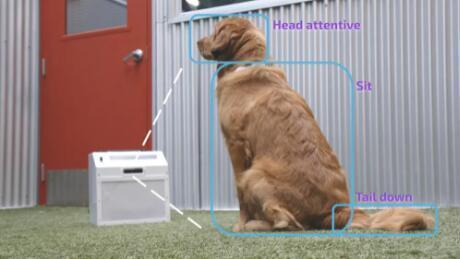 借助此AI教练帮助狗狗应对分离焦虑