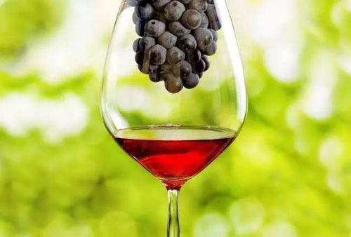 红酒化合物抑制大脑抑郁